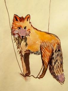 27 Fox In The Woods