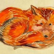 26 Fox