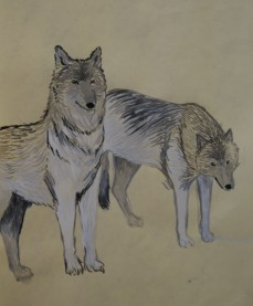 25 Wolves